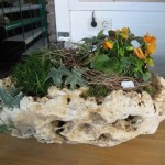 Jurafindling bepflanzt